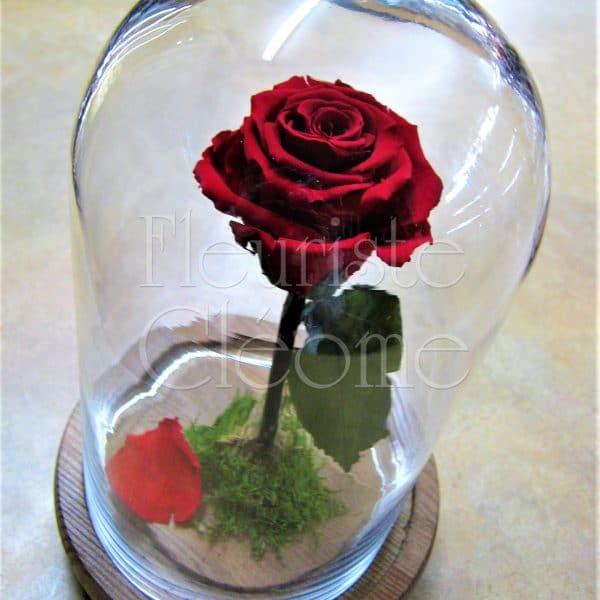 rose ternelle la belle et la b te fleuriste cl ome. Black Bedroom Furniture Sets. Home Design Ideas